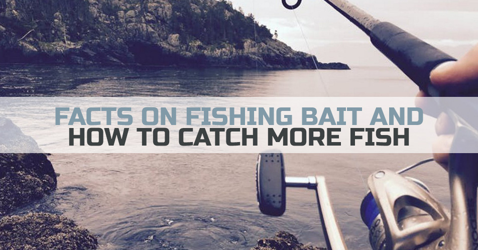 Facts on Fishing Bait and How to Catch More Fish